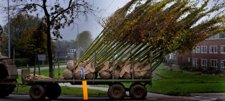 Kluit aan boom gevrijwaard van extra eisen PFAS - Nieuwe Oogst