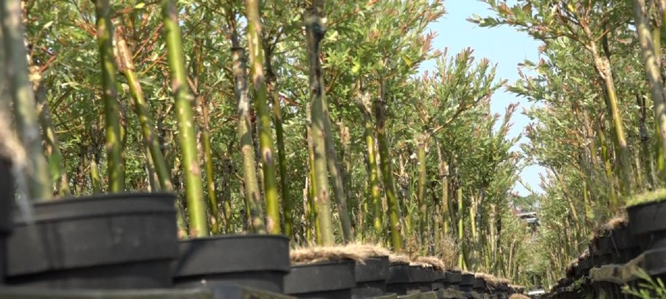 Boomkweker wint zaak woningen Gassel - Nieuwe Oogst