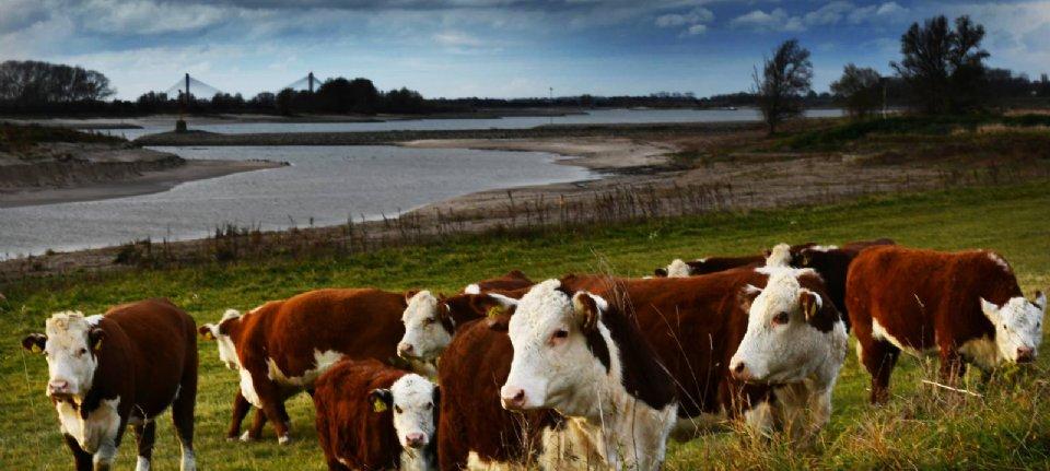 LTO: slachttaks draait veehouderij de nek om - NieuweOogst.nu